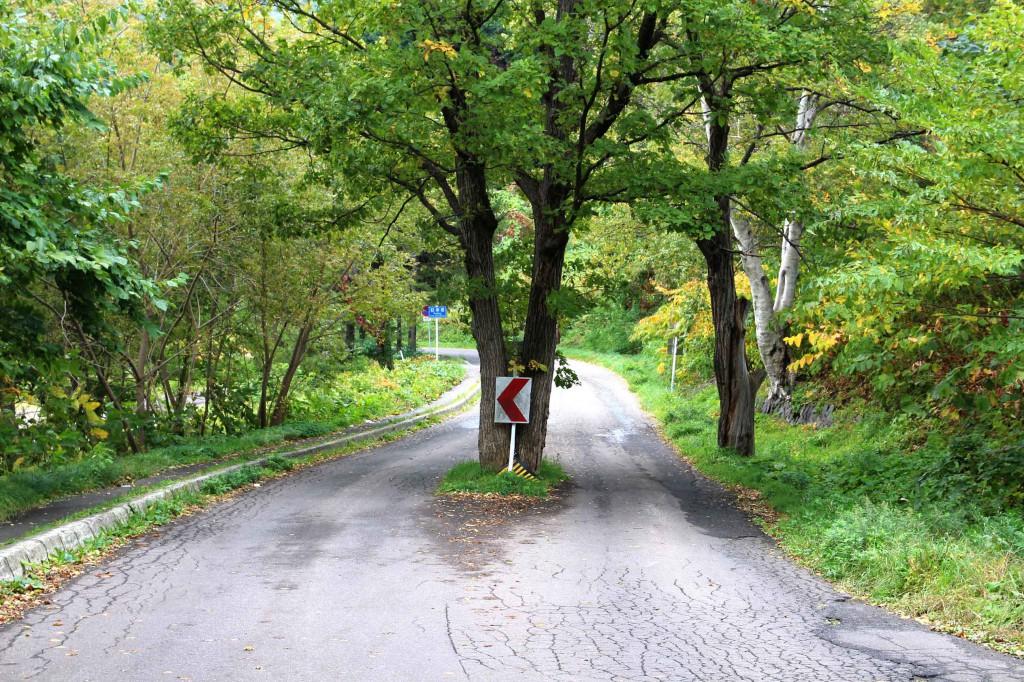 道路中央の木