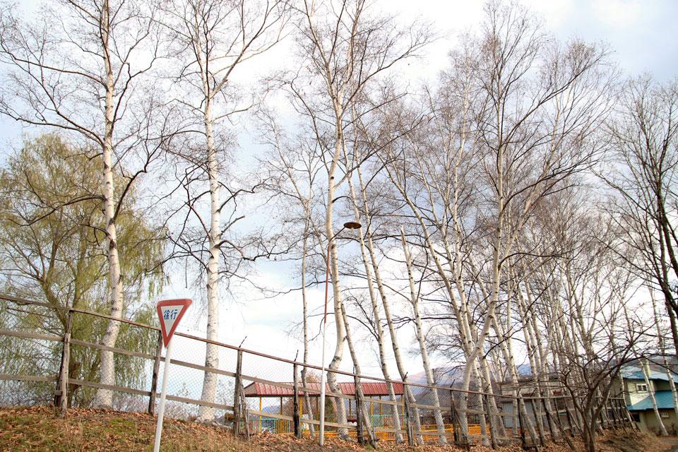 小樽公園街灯2