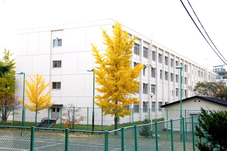 小樽商業高校のイチョウ2