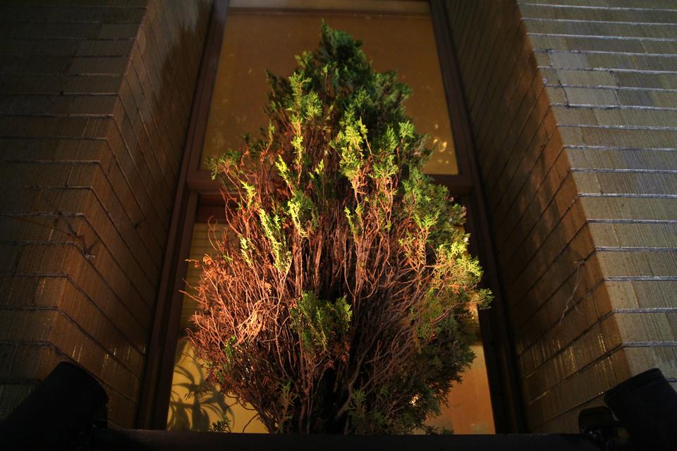 無尽ビル窓の木
