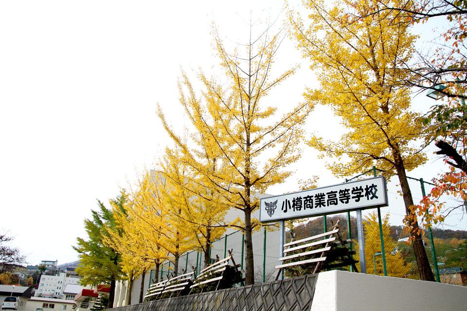 小樽商業高校のイチョウ1