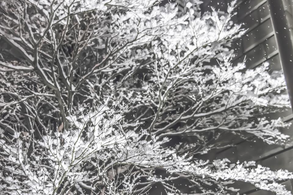 旧三井銀行入り口横の木