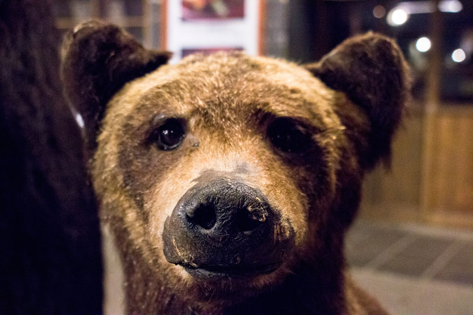 クマの剥製子