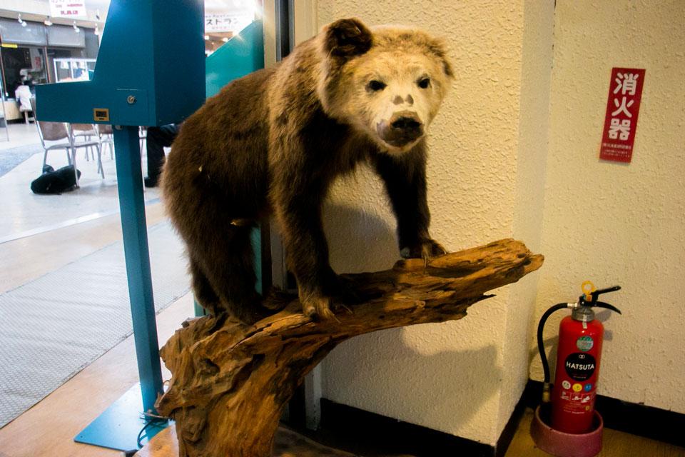 天狗山熊の剥製2