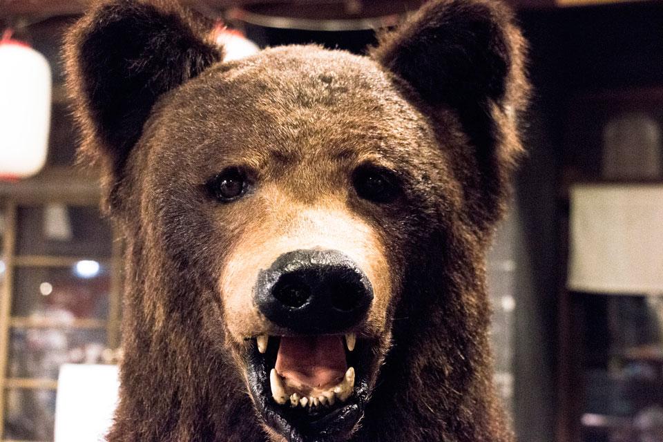 クマの剥製親