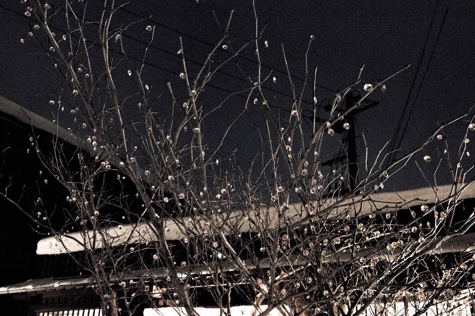 願いが叶う木1
