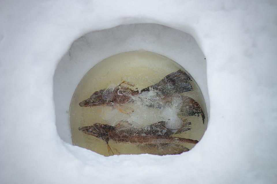 小樽雪あかりの路小樽運河会場八角2