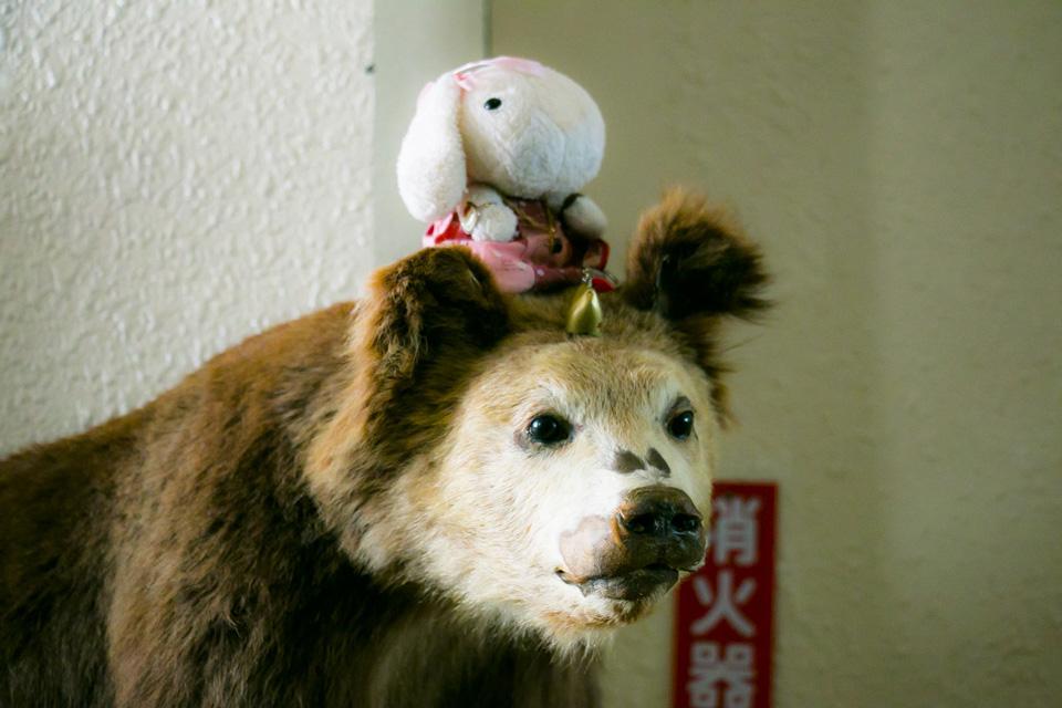 天狗山の子熊の剥製